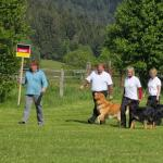 Hovawart Obedience WM