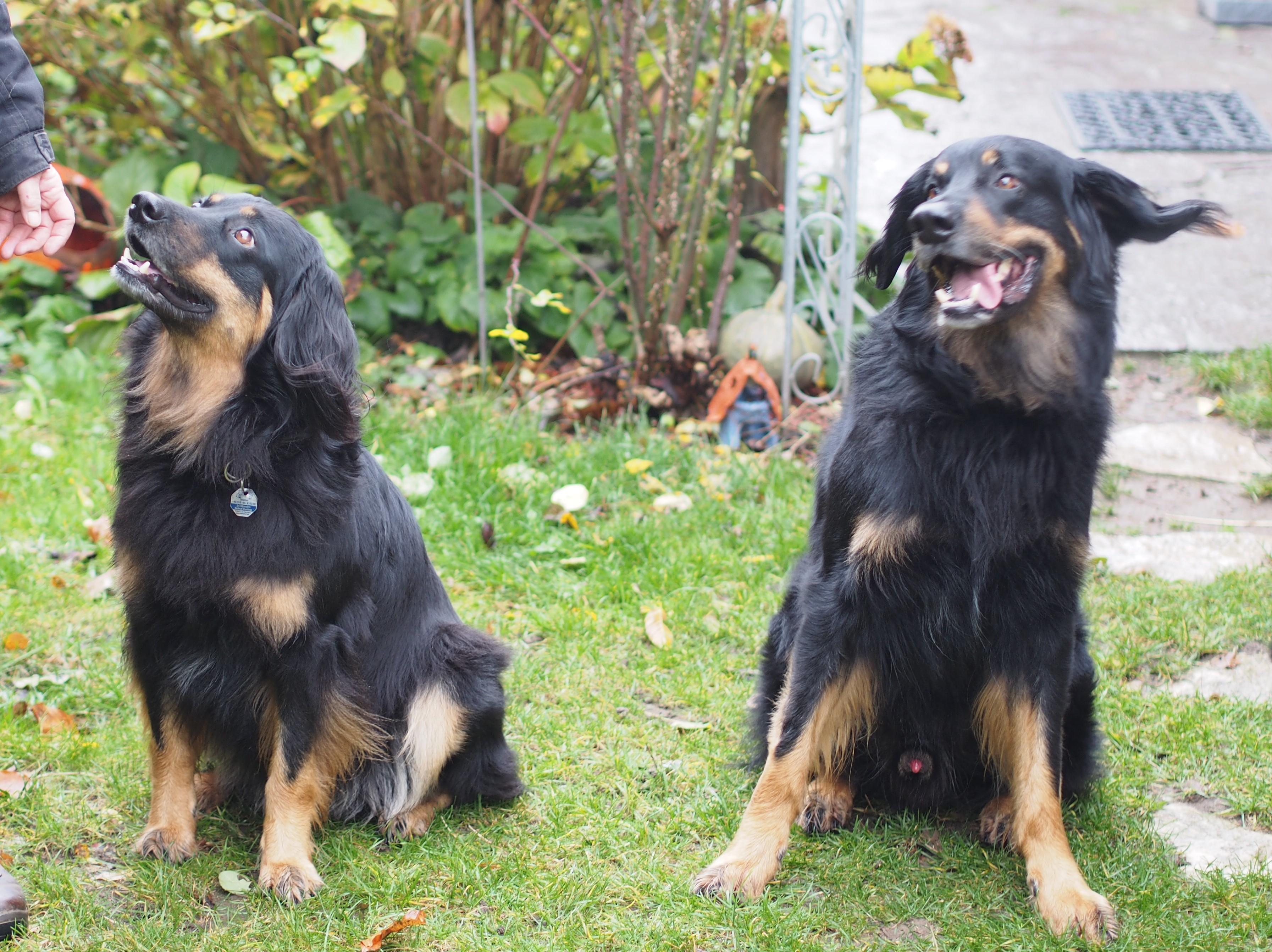 Aenya und Miro 5.11.2016