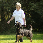 Hovawart Obedience WM 2014