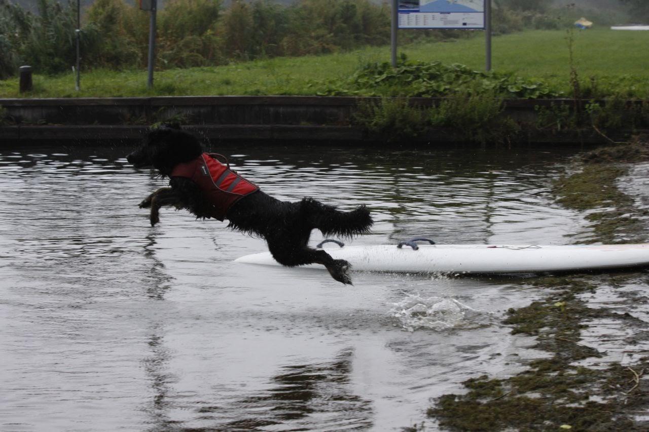 Rettungshunde-Wassserarbeit